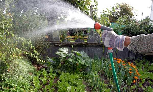 поливаем двор