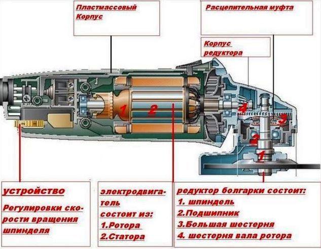 описание внутренних органов инструмента